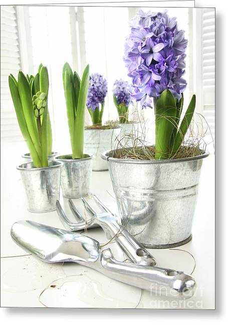 Spring Bulbs Greeting Cards - Purple hyacinths on table with sun-filled windows  Greeting Card by Sandra Cunningham