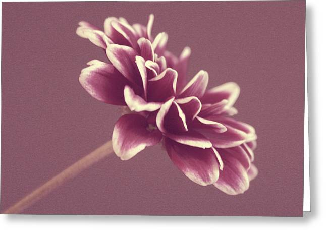 Purple Mum Greeting Card by Cathie Tyler