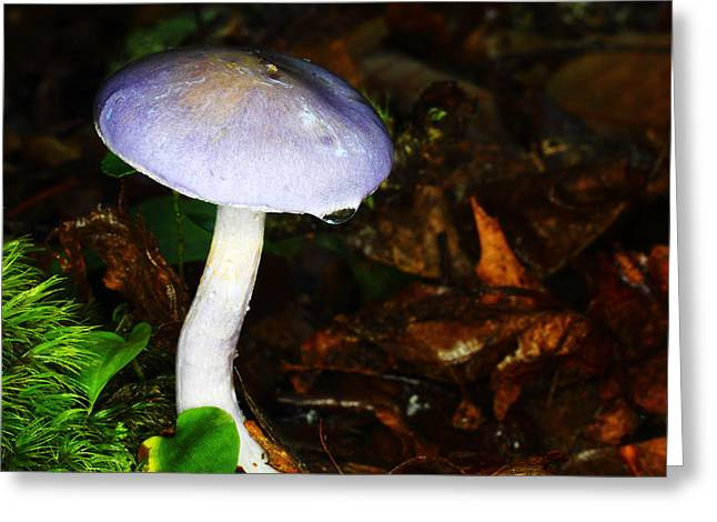 Toadstools Greeting Cards - Purple Mushroom Russula Cyanoxantha Greeting Card by Andrew Pacheco