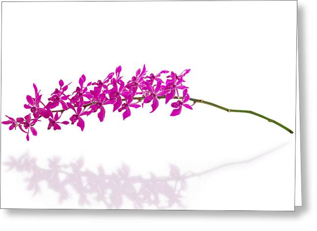 Reflex Greeting Cards - Purple Orchid Bunch Isolated Greeting Card by Atiketta Sangasaeng