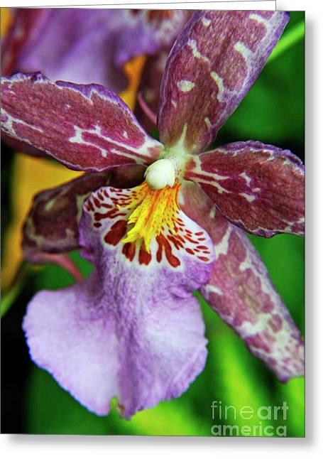 Sami Sarkis Greeting Cards - Purple Orchids Greeting Card by Sami Sarkis