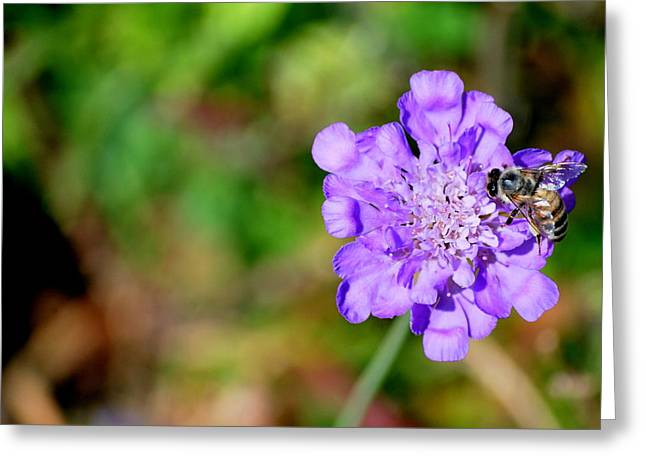 Pin Cushion Flower Greeting Cards - Purple Pin Greeting Card by Amee Stadler