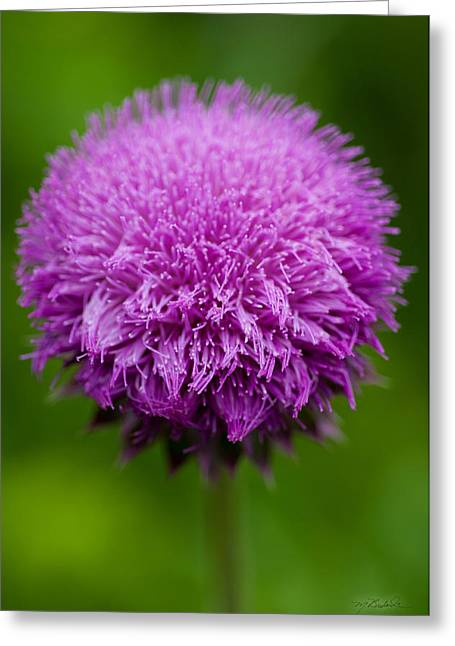 Indiana Flowers Greeting Cards - Purple Puff Greeting Card by Melissa Wyatt