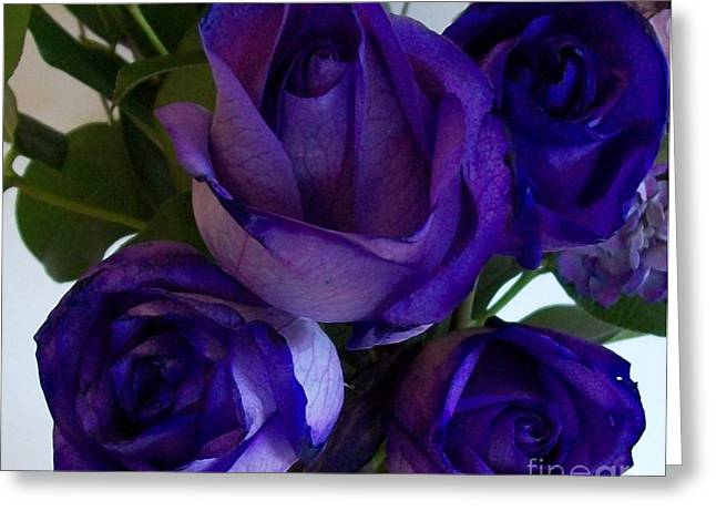 Floral Photographs Greeting Cards - Purple Roses ll Greeting Card by Marsha Heiken