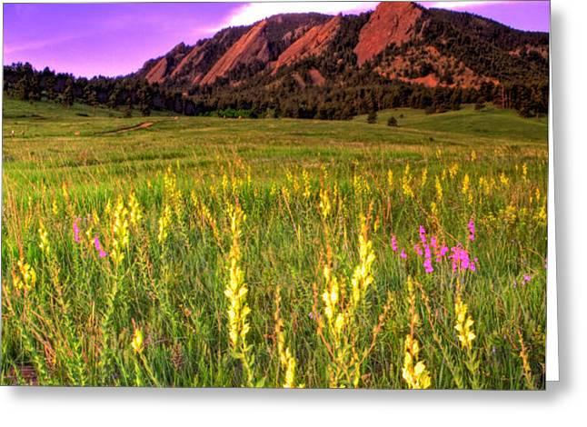 Purple Skies and Wildflowers Greeting Card by Scott Mahon
