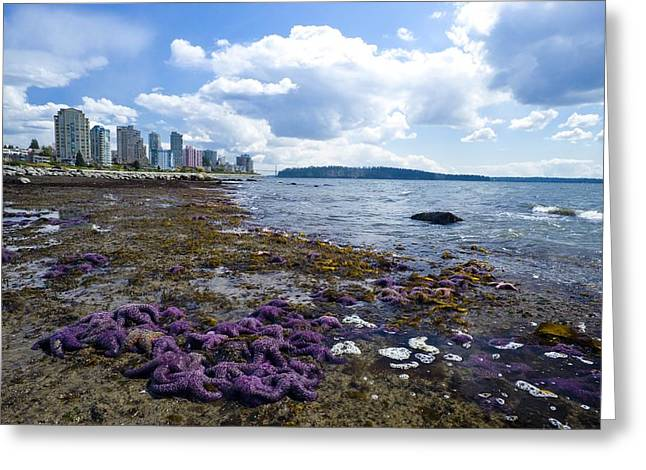 North Vancouver Greeting Cards - Purple Starfish On A Beach, Canada Greeting Card by David Nunuk