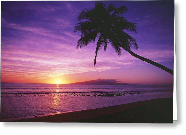 Location Art Greeting Cards - Purple Sunset and Palm Greeting Card by Ron Dahlquist - Printscapes