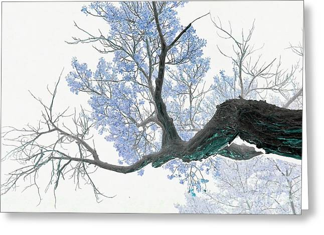 Photos Of Trees Greeting Cards - Purple tree 1 Greeting Card by Rebecca Margraf