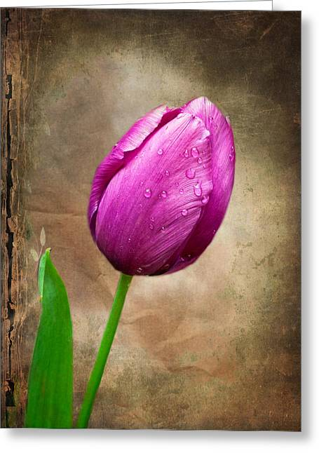 Texture Flower Greeting Cards - Purple Tulip Greeting Card by Fred LeBlanc