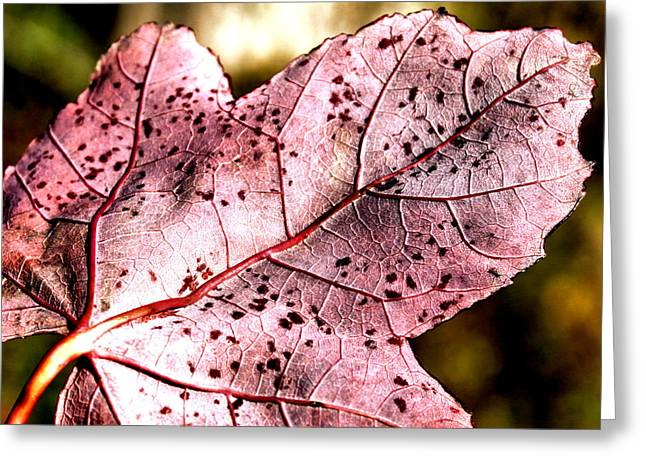 Hues Of Purple Greeting Cards - Purple Vein Greeting Card by Karen M Scovill