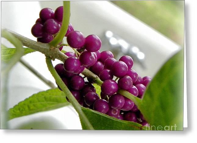 Purples And Greens Greeting Card by Tisha  Clinkenbeard