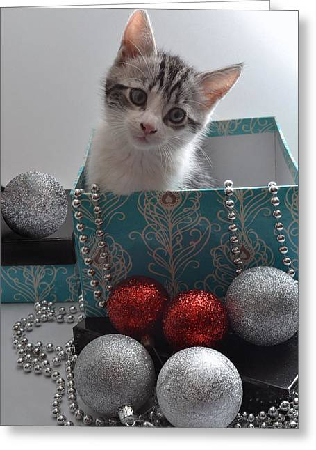 Cat Christmas Cards Greeting Cards - Purr-fect Christmas. Greeting Card by Terence Davis
