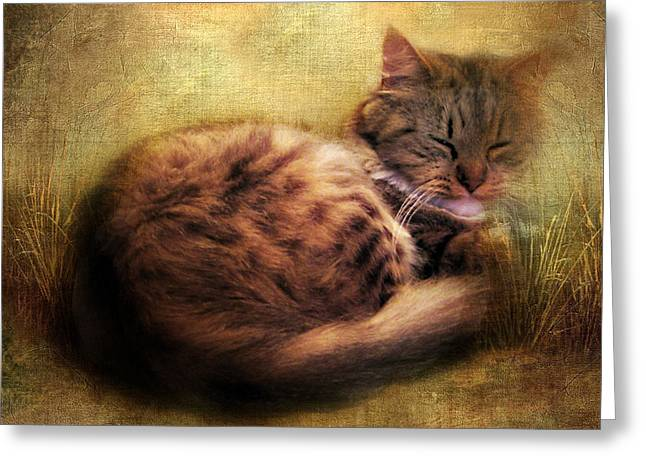 Cat Paw Greeting Cards - Purrfectly Content Greeting Card by Jessica Jenney