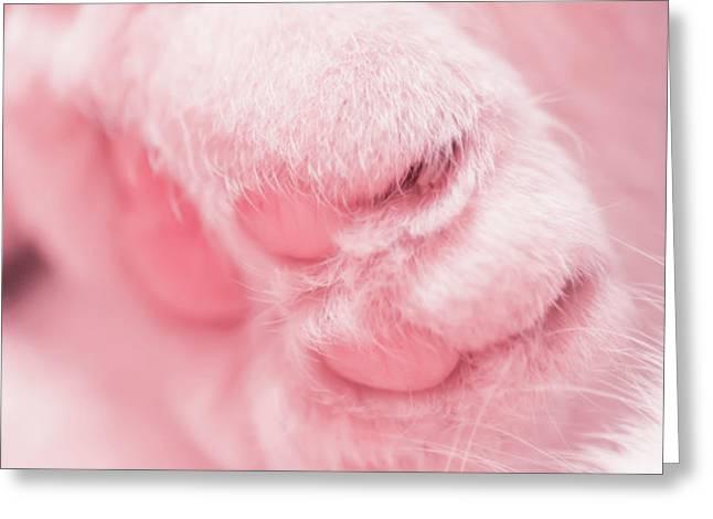 Pussy Cat Greeting Card by Mandy Tabatt