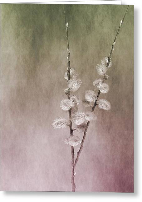 Pussy Mixed Media Greeting Cards - Pussy Willow Greeting Card by Ingrid Gertz