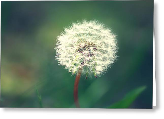 Phantasie Greeting Cards - Pusteblumen Art Greeting Card by Tanja Riedel