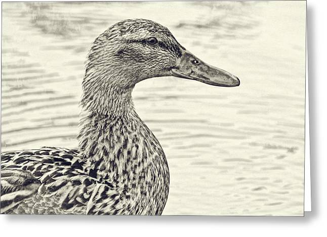 Water Fowl Greeting Cards - Quack Quack Greeting Card by Bonnie Bruno