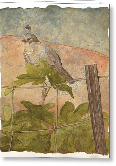 Quail On Fig Greeting Card by Sara Bell