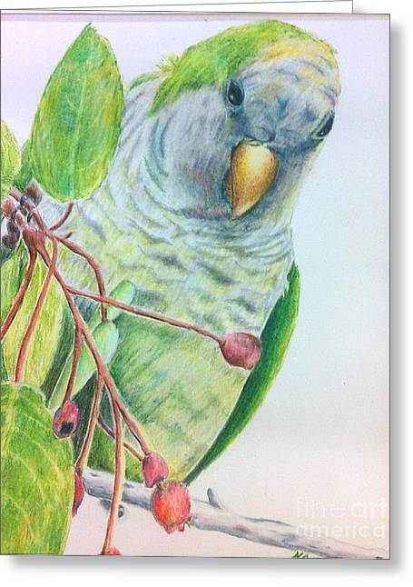 Quaker Drawings Greeting Cards - Quaker Greeting Card by Norma Gafford