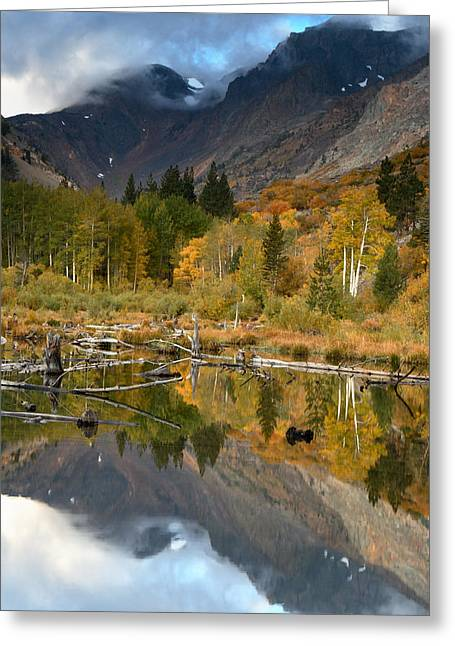 Quaking Aspen Greeting Cards - Quaking Aspen Forest Lundy Canyon Greeting Card by Sebastian Kennerknecht