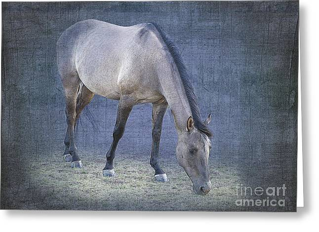 Quarter Horses Greeting Cards - Quarter Horse in Blue Greeting Card by Betty LaRue