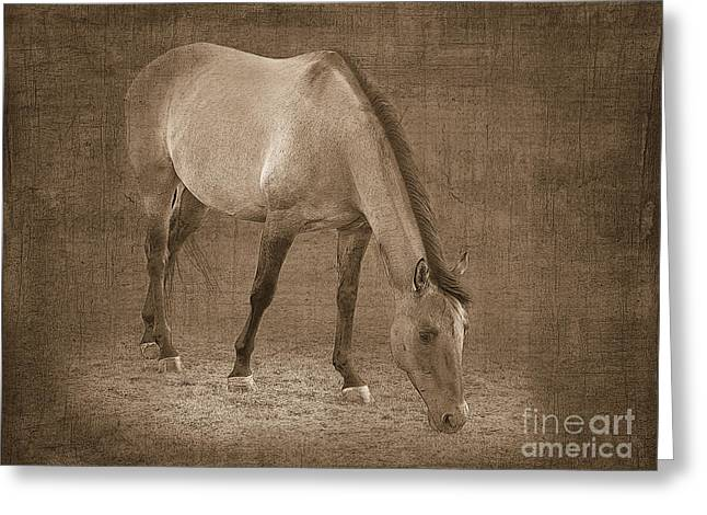 Quarter Horses Greeting Cards - Quarter Horse in Sepia Greeting Card by Betty LaRue