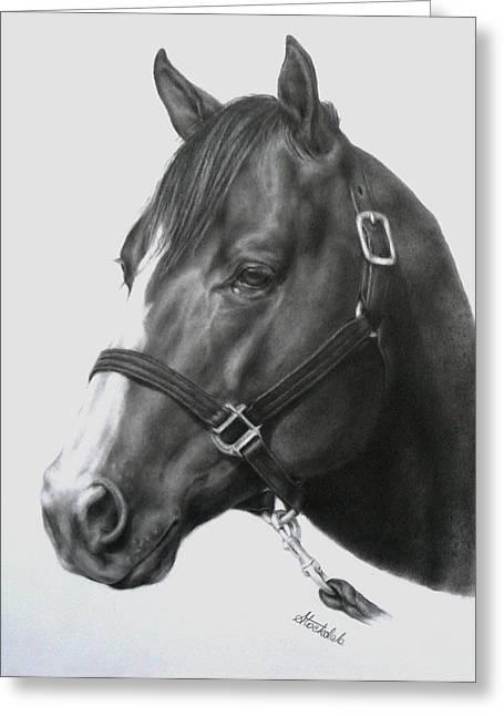 Margaret Stockdale Greeting Cards - Quarter Horse Portrait Greeting Card by Margaret Stockdale