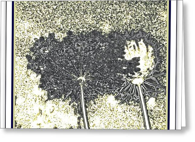 Queen Ann Lace Illustrated Greeting Card by Danielle  Parent
