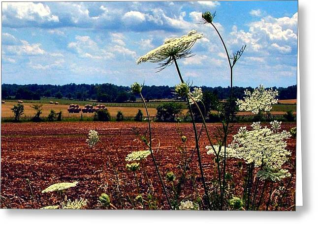 Plowing Field Greeting Cards - Queen Annes Lace and Hay Bales Greeting Card by Julie Dant