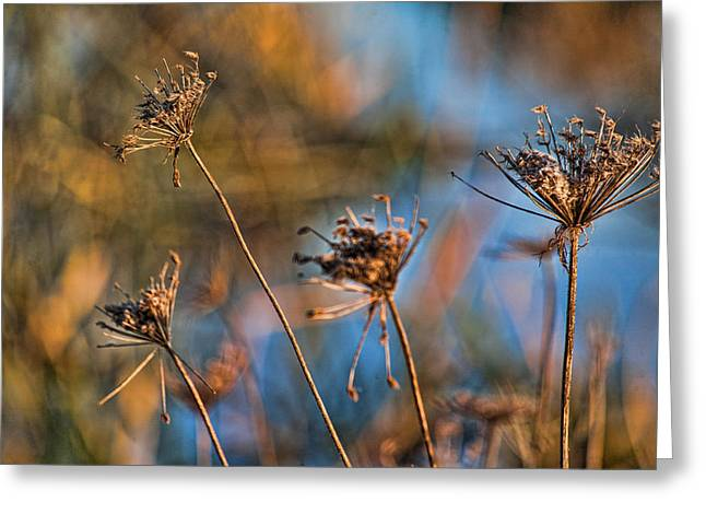 Queen Annes Lace Greeting Cards - Queen Annes Lace Greeting Card by Bonnie Bruno