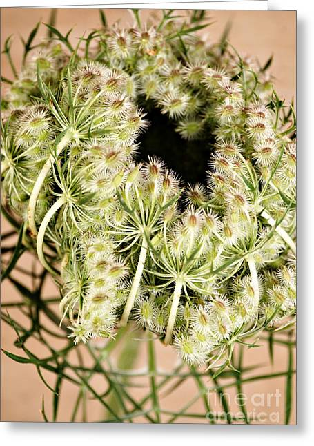 Queen Annes Lace Greeting Cards - Queen Annes Lace Greeting Card by HD Connelly