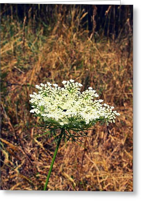Queen Anne's Lace On The Beach Greeting Card by Michelle Calkins