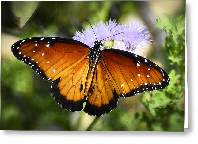 Queen Butterfly Greeting Cards - Queen Butterfly on Flower  Greeting Card by Saija  Lehtonen
