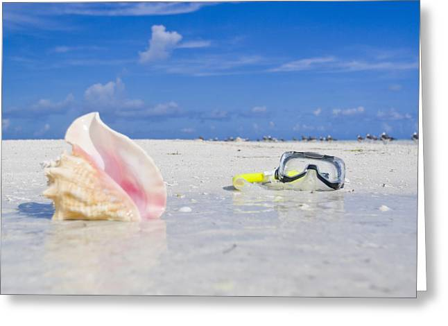 Snorkel Greeting Cards - Queen Conch Shell And Snorkel Mask Greeting Card by Mike Theiss
