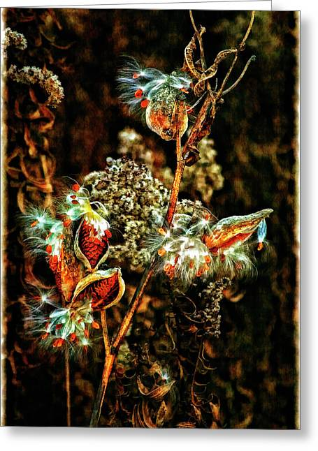 Milkweed Greeting Cards - Queen of the Ditches II Greeting Card by Steve Harrington