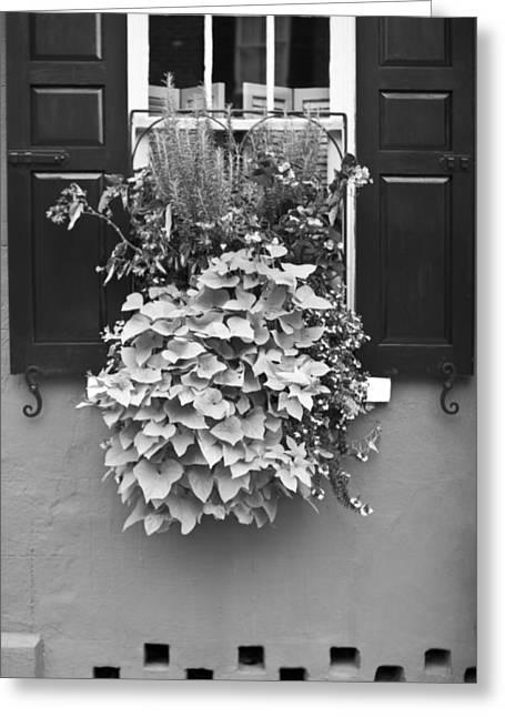 Flower Baskets Greeting Cards - Queen Street Flower Basket Greeting Card by Dustin K Ryan