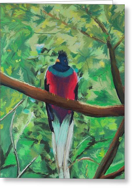 Costa Pastels Greeting Cards - Quetzal in Costa Rica Greeting Card by Dana Schmidt