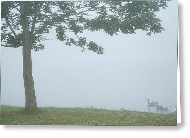 Quiet Fog Rolling In Greeting Card by Karol Livote