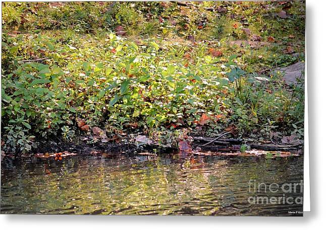 Quiet Moment Greeting Card by Maria Urso