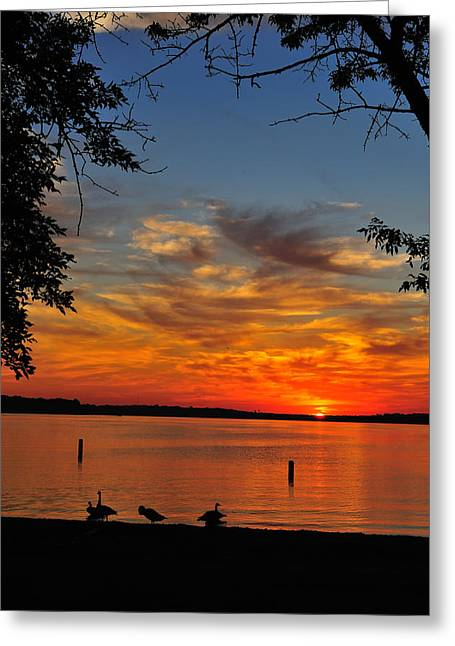 Quiet Morning Greeting Card by Rusty  Enderle