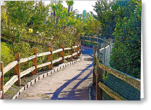 Ocean Art Photos Greeting Cards - Quiet Path Along the Lagoon Greeting Card by Chuck Staley