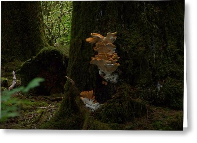 Toadstools Pyrography Greeting Cards - Quinault Wa Fungus In The Forest Greeting Card by Laurie Kidd