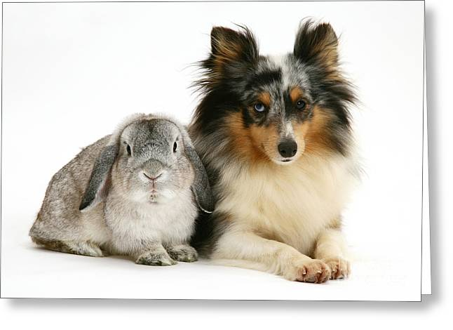 Lop Greeting Cards - Rabbit And Dog Greeting Card by Jane Burton