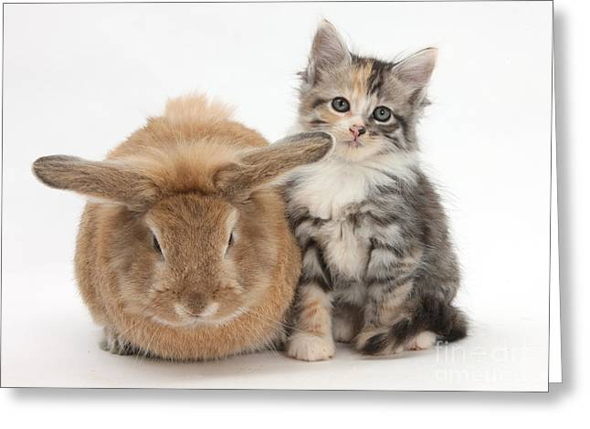 House Pet Greeting Cards - Rabbit And Kitten In A Flowerpot Greeting Card by Mark Taylor