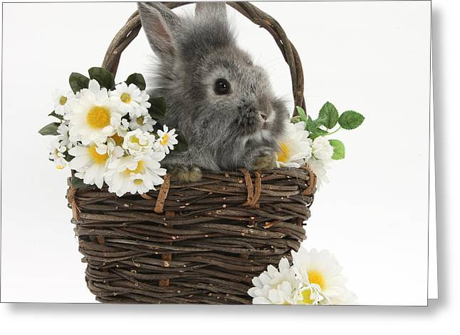 Domesticated Flower Greeting Cards - Rabbit In A Basket With Flowers Greeting Card by Mark Taylor