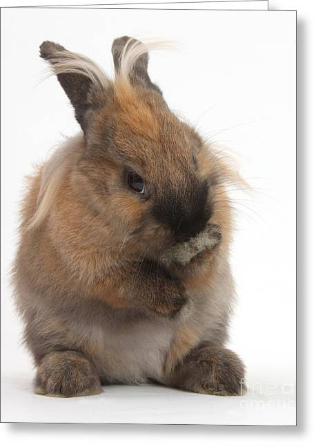 Bashful Greeting Cards - Rabbit Looking Bashful Greeting Card by Mark Taylor