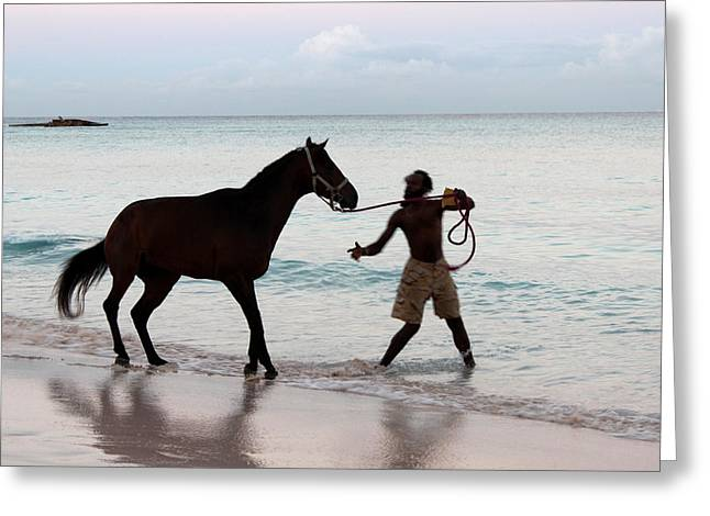 Before The Races Greeting Cards - Race horse and groom 1 Greeting Card by Barbara Marcus