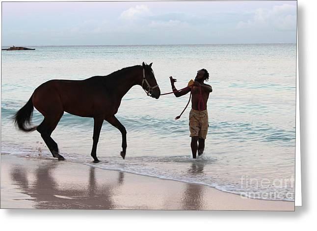 Before The Races Greeting Cards - Race Horse and Groom 2 Greeting Card by Barbara Marcus