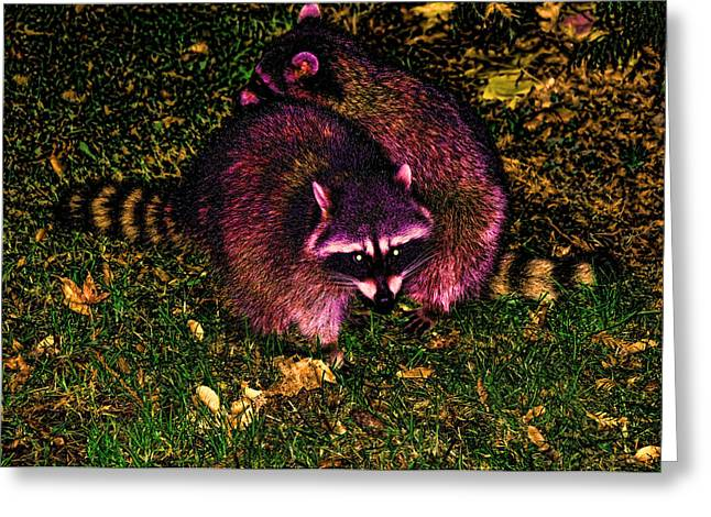 Racoons In Stanley Park Greeting Card by Lawrence Christopher