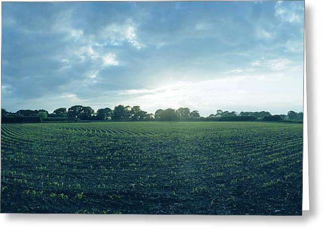 Raf Winkton Cornfield Greeting Card by Jan W Faul